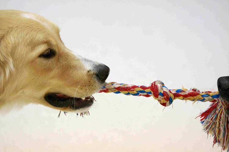 6-Great-Ways-To-Challenge-Your-Dog's-Mind