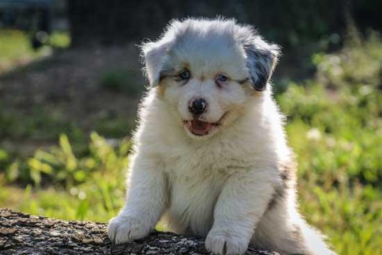 Popeye-the-Foodie-Dog