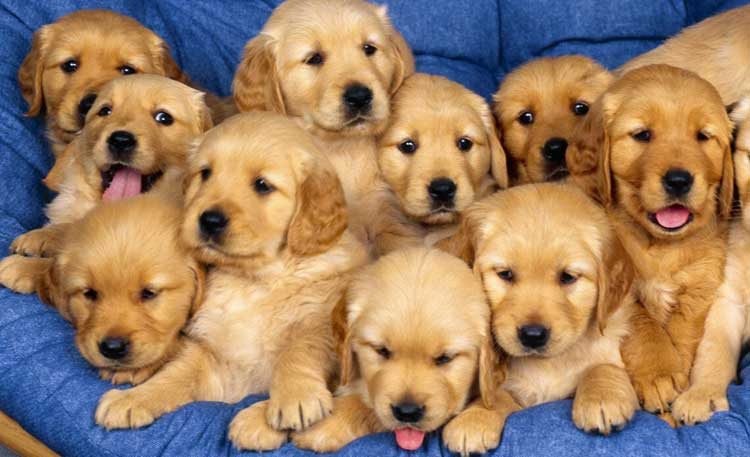 Sweet-puppies