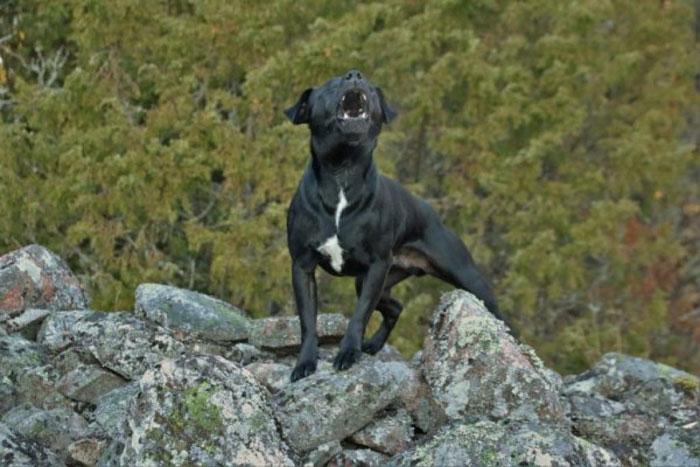 My-Dog-Bark