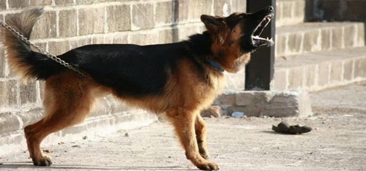dogs-barking-aggressive-sound