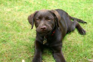 RUFFWEAR , Front Range Dog Leash