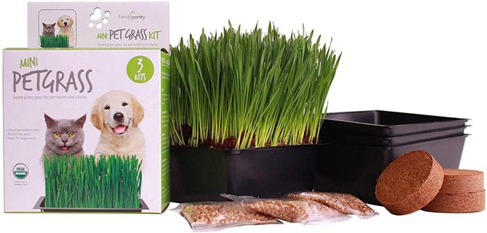 Mini-Organic-Pet-Grass-Kit