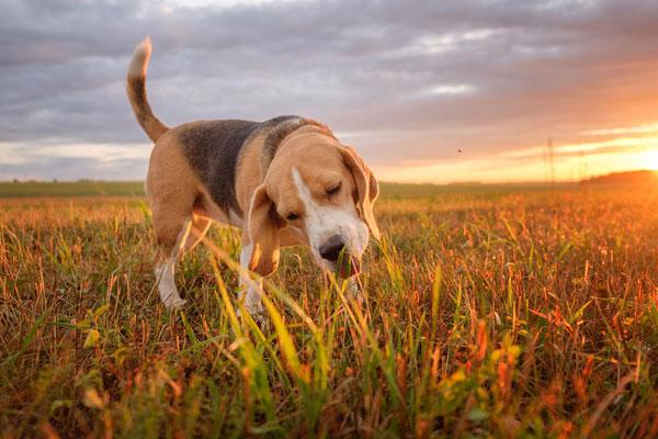 My-Dog-Eats-Grass