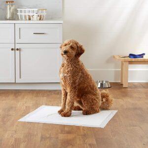 AmazonBasics Dog and Puppy Potty Training Pads