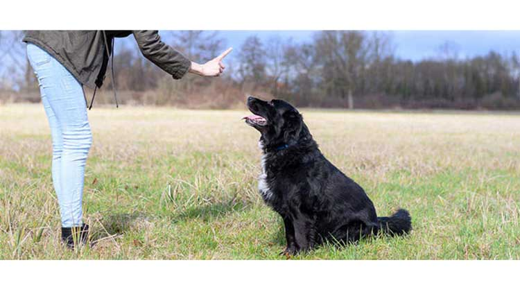 An-Amazing-Guide-to-Teach-Your-Dog-to-Sit