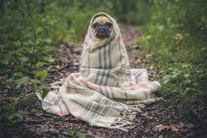 Dog--mental-problems