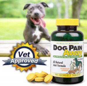 Dog-pain-porns