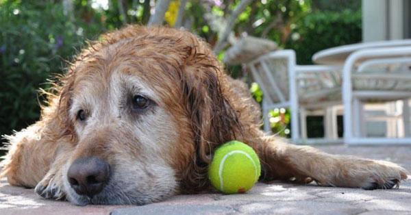 Symptoms-of-Dog-Constipation