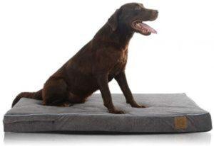 dog's-car-seat