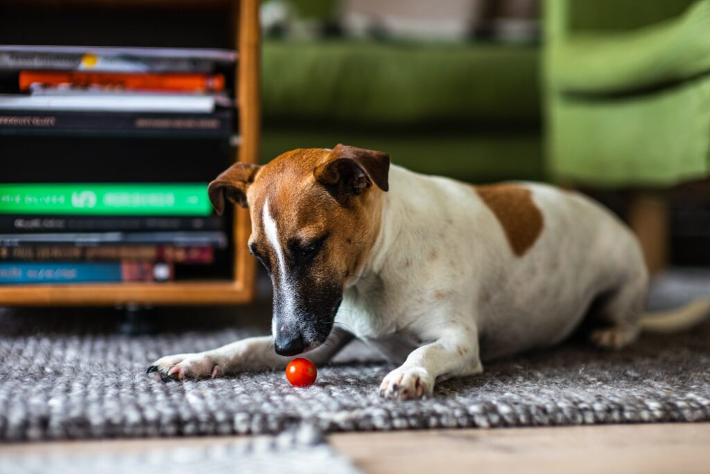 Read more about How to teach your dog to Sit?
