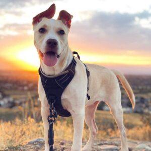 Rabibitgoo Dog Harness