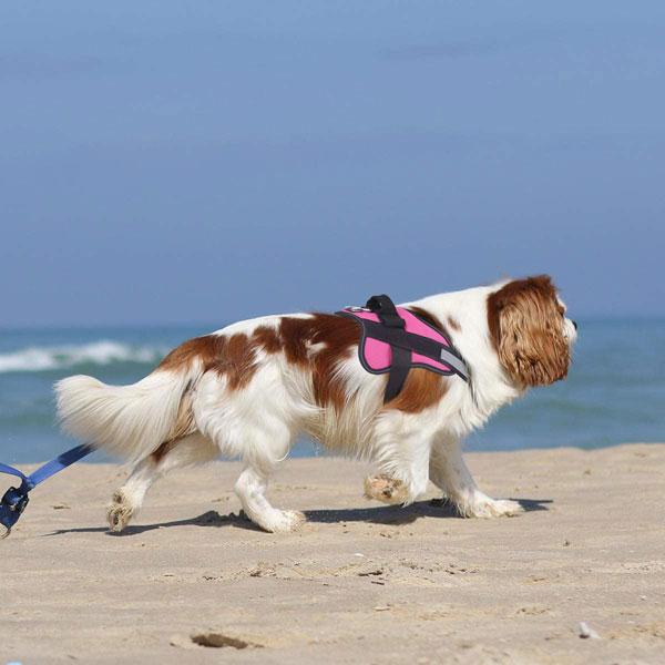 Bolux-No-Pull-Dog-Harness
