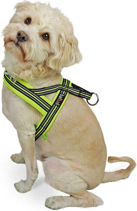 Puglife-Harness