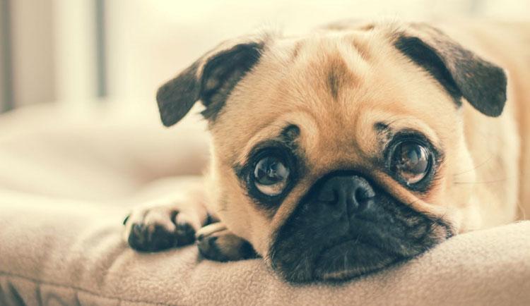 Best-Dog-Dewormer