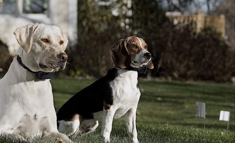 Best-Wireless-Dog-Fence