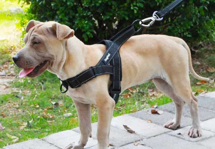 Control-Your-Dog-In-Better-Way-With-Step-In-Harness-For-Dogs