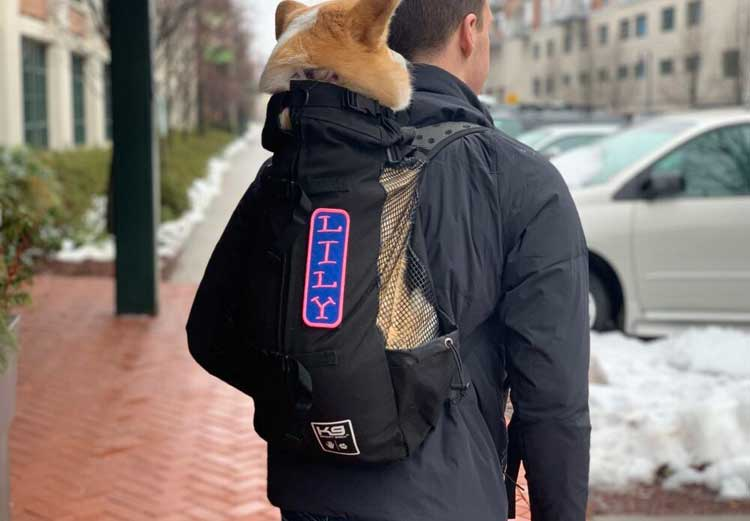 Dog-Backpack-Carrier-to-Take-Your-Furry-Fellow-on-a-Hike