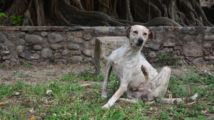 Dog-Dewormer-specificatio