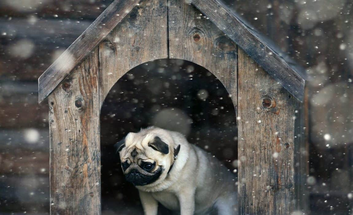 Dog warm house feature image