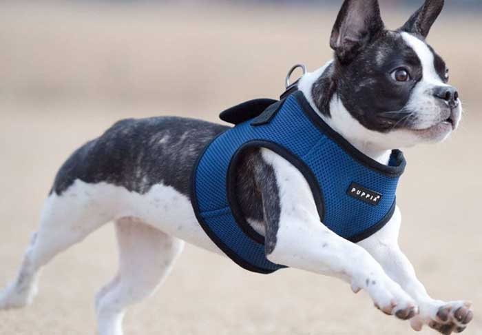 Puppia-Harness-Reviews
