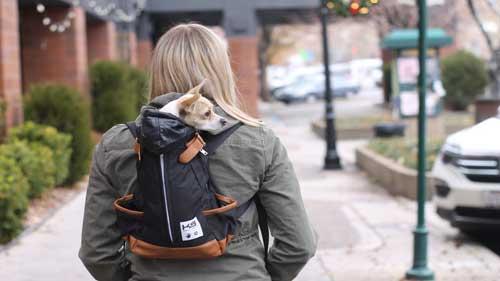 The Best Dog Backpack