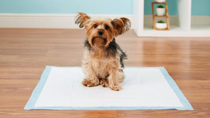 how-Potty-Train-Your-Dog