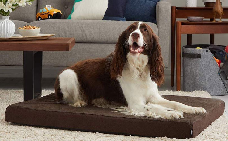 Best-Dog-Beds-For-Crates