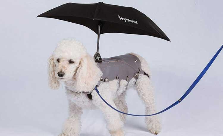 Best Umbrella for dog