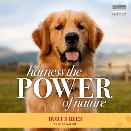 Burt's-Bees-Lotion