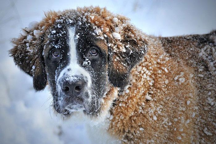 Dog-lazy-and-lethargic