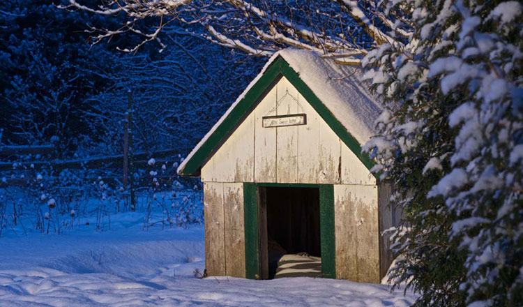 Insulated-Dog-House-for-Outdoor-Warmth-in-Winter