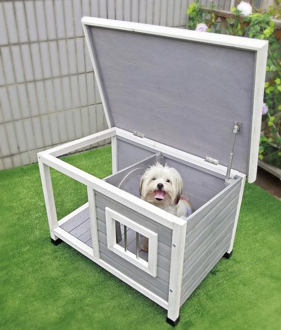 Insulated-Dog
