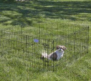 Best dog runs