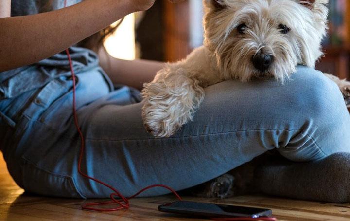 best-slicker-brushes-for-dogs