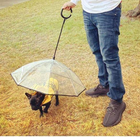 dog-umbrella-leash