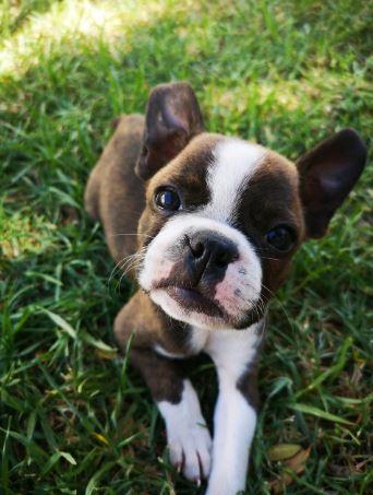 mucus-in-dog-poop-1
