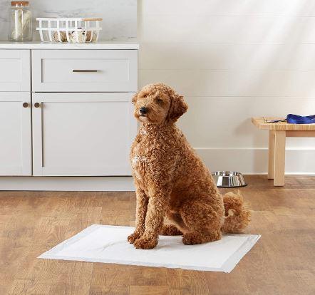 amazonbasics dog poop pads