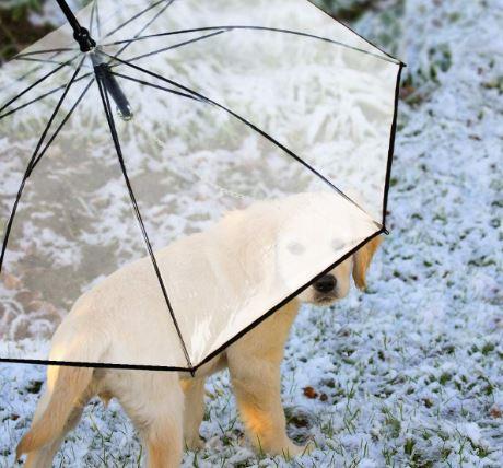 umbrella-leash-for-dogs
