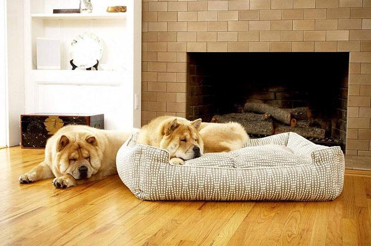 Chew-Proof-Dog-Bed-Amazon