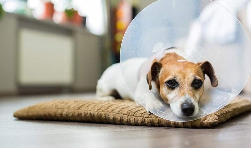best-dog-e-collar