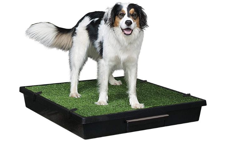 PetSafe Pet Loo Portable Dog Indoor Potty