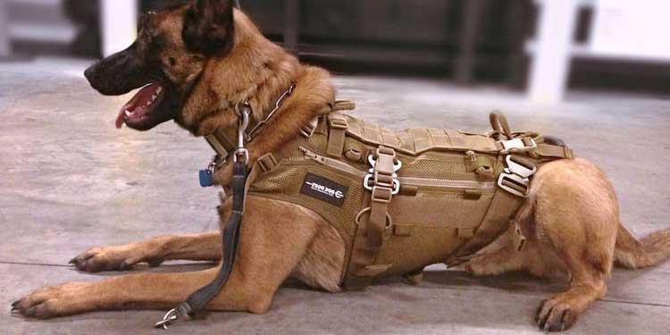 Best-Military-Style-Harness