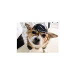 Namsan Dog Safety Helmet