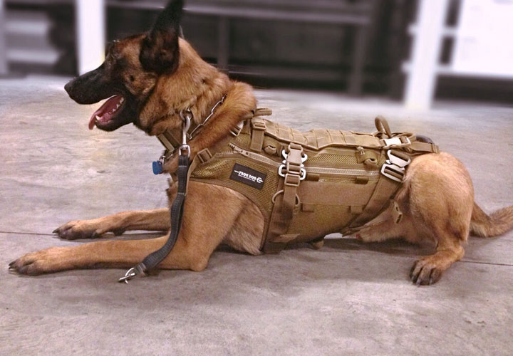 best-tactical-dog-harness