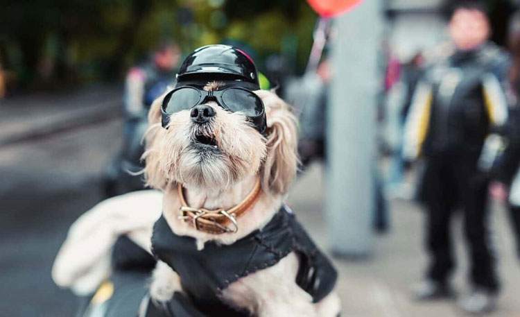 dog-riding-motorcycle