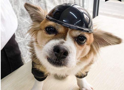 the best dog motorcycle helmet