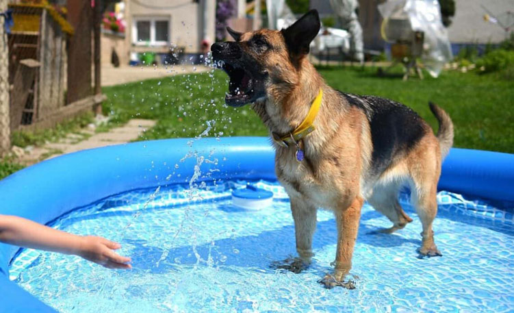 great-pools-for-dog