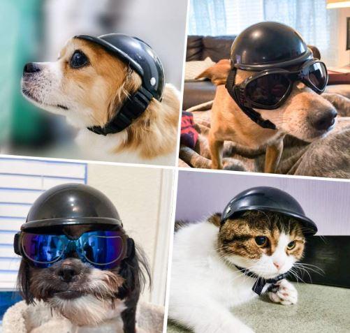 Best Dog Motorcycle Helmet