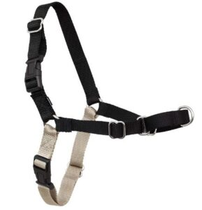 How is an easy walk harness correctly attached?